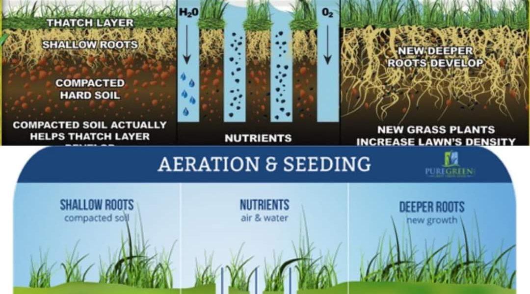aeration and seeding